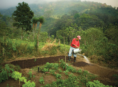 Guatemala villager caring for garden