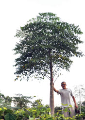 Mark with a moringa tree